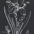Botanique 1 by Debbie DeWitt