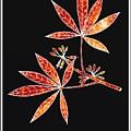 Botany 1 by Alberto RuiZ