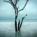 Botany Bay Plantation Edisto Island Sc by Robert Stephens