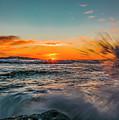 Botany Sunset Splash by Barry Reid