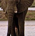 Botswana by Paul James Bannerman