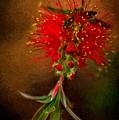 Bottle Brush Flower by Patti Schulze