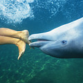 Bottlenose Dolphin by Bob Abraham - Printscapes
