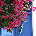 Bougainvillea And Blue by Yvonne Ayoub