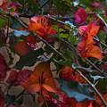 Bougainvillea At Joe's Secret Garden by Al Bourassa