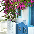 Bougainvillea In Santorini Island by Antonio Gravante