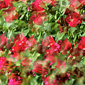 Bougainvillea Repeating Pattern Abstract I by Linda Brody