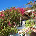 Bougainvillea Villa by Debbi Granruth