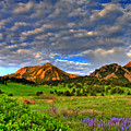Boulder Spring Wildflowers by Scott Mahon