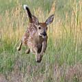 Bounding Bambi by Tony Hake