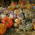 Bountiful Fall Harvest by Theresa Campbell