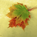 Bouquet De Feuilles / Bunch Of Leaves by Dominique Fortier