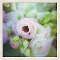 Bouquet by Kate Zari Roberts