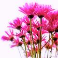 Bouquet Of Chrysanthemums by Scott Pellegrin