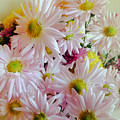Bouquet Of Daisies by Julia Gogol