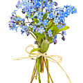 Bouquet of forget-me-nots by Elena Elisseeva