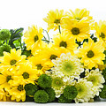 Bouquet Of Fresh Spring Flowers Isolated On White by Michal Bednarek