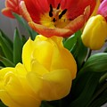 Bouquet Of Tulips  by Sharon Duguay