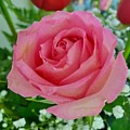 Bouquet Rose by Gayle Miller