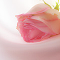 Boutique Roses by Irina Effa