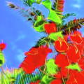 Bougainvillea Glow by Kay Brewer
