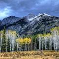 Bow Valley Parkway Banff National Park Alberta Canada II by Wayne Moran