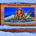Bow Valley Parkway Snowy Entrance by Adam Jewell