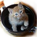 Bowlful Of Kitten by Rhonda Chase
