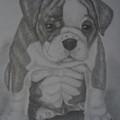 Boxer Puppy by Ian Lennox