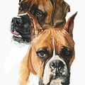 Boxers by Barbara Keith