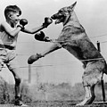 Boxing With Dog by Topical Press Agency
