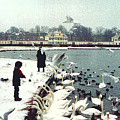 Boy Feeding Swans- Germany by Nancy Mueller