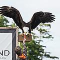 Boy Feeds Mr. Bald Eagle by Tom Rostron