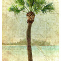 Bradenton Palm by Gregg Cestaro