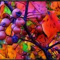 Bradford Pear In Autumn by Judi Bagwell