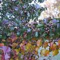 Bradford Pear Tree With Berries by Anne-Elizabeth Whiteway