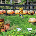 Brads Pumpkin Patch Art by Doc Braham