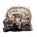 Brain, Anatomical Illustration, 1823 by Wellcome Images