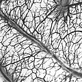 Brain Arteries And Veins by Wellcome Images