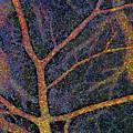 Brain Tissue Blood Supply by Thomas Deerinck, Ncmir