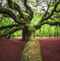 Branch Leading To Angel Oak Tree by Michael Ver Sprill