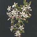 Branch Of A Flowering Azalea, M. De Gijselaar, 1831 by M  de Gijselaar