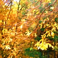 Branch Of Autumn Leaves by Jeelan Clark