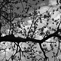 Branch Patterns by John Randolph