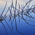 Branch Reflections 484 by Jerry Sodorff