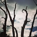 Branch Silouettes On Skeleton Beach by Aimee Naworal