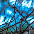 Branches 23 by Daniel DeLucia