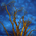 Branches Against Night Sky H by Heather Kirk