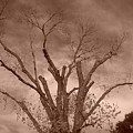 Branches Against Sepia Sky H   by Heather Kirk