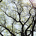 Branches Against Sky In Spring Outback by HazelPhoto
